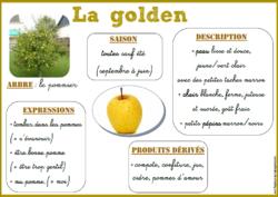 Fiches de vocabulaire sur les fruits