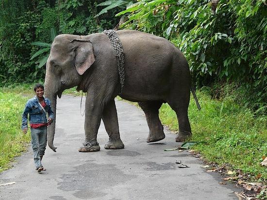 rencontre insolite; un éléphant part travailler dans les bois;