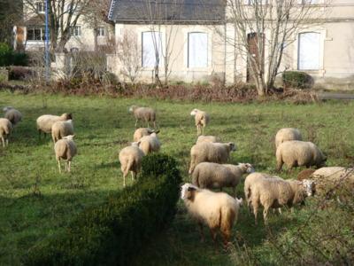 Blog de melimelodesptitsblanpain : Méli Mélo des p'tits Blanpain!, Les p'tits Bonheur de l'Avent 2012! ;o)