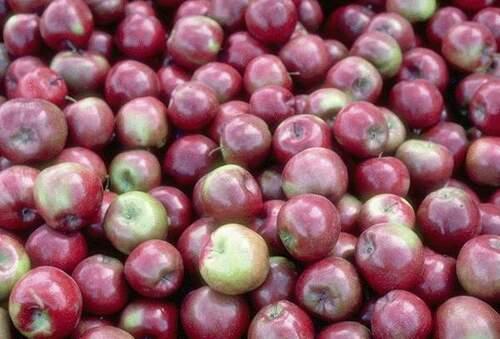 Un fruit par jour : 40 % de risques cardiovasculaires...en moins !