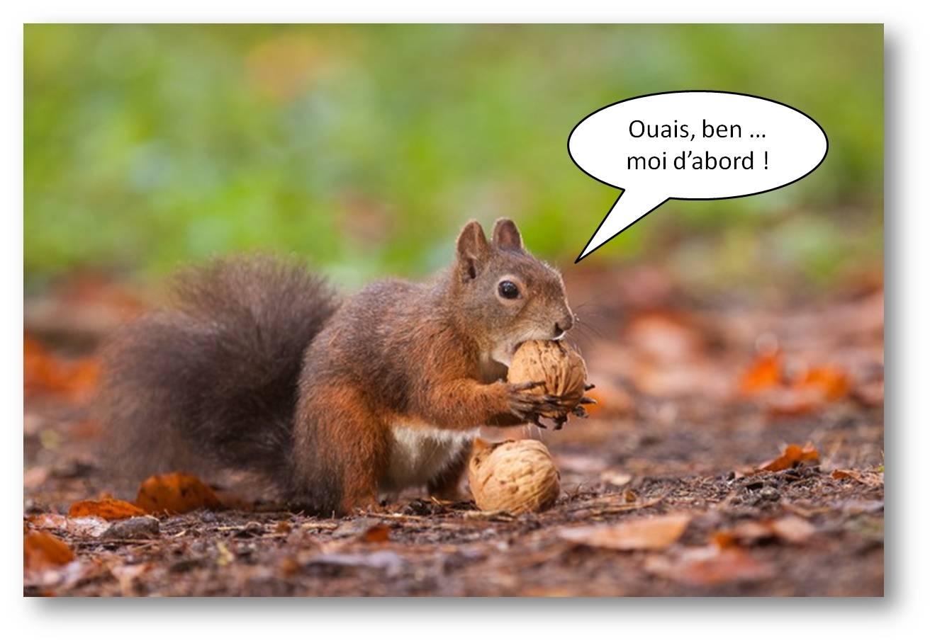 Le retour des pains aux noix