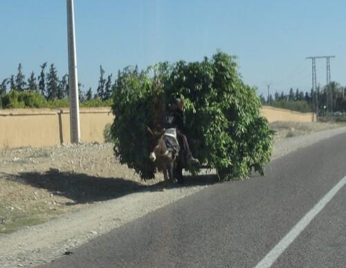 Taroudant vers Marrakech 4 février