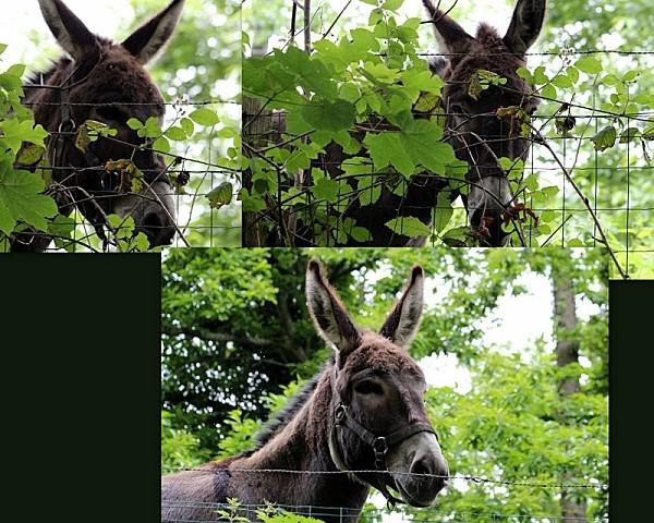 2012-06-17-les-ecluses-de-hede6.jpg