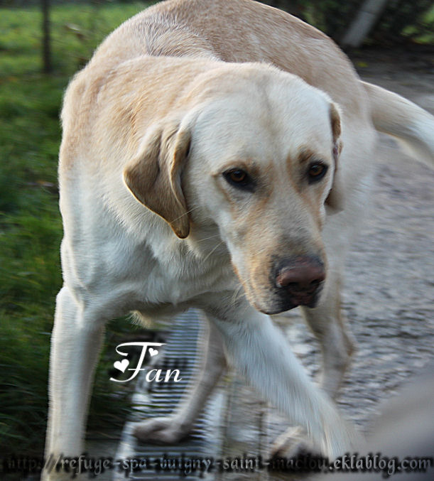 Photos du 30/11/12 - chiens moyens et grands