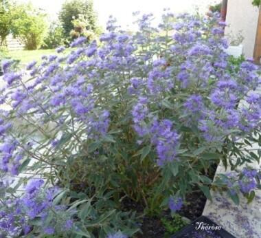 Fleurs d'automne (6)