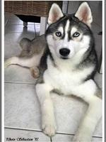 Neïko (5,5 mois)
