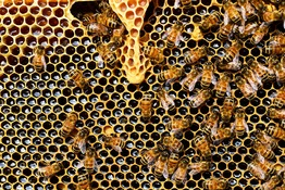 5 Fun Facts About Bees