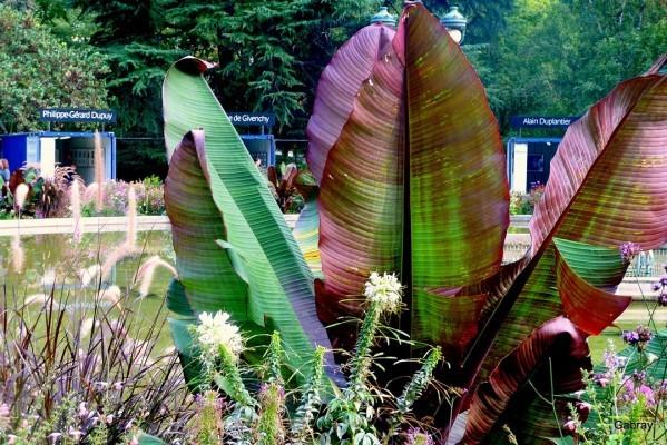 V07---Plantes.JPG