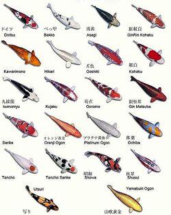 variétés de koï