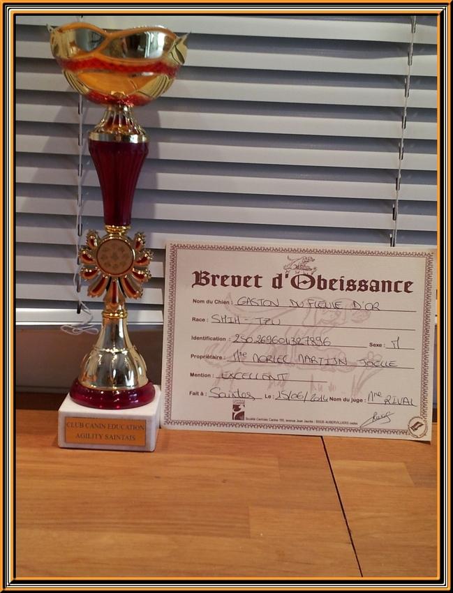 Concours d'obéissance  à Saintes le 13 et 14 juin 2014