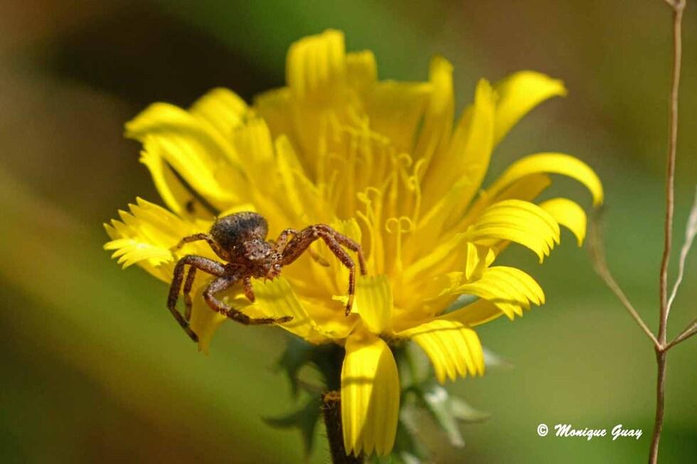 Sur une fleur posée