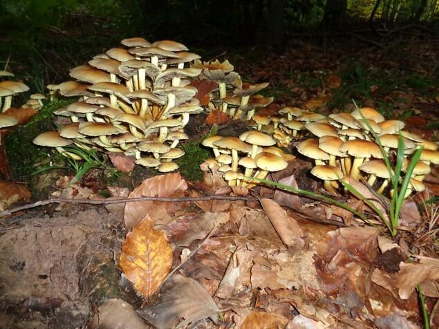 des champipi des champignons tiens donc