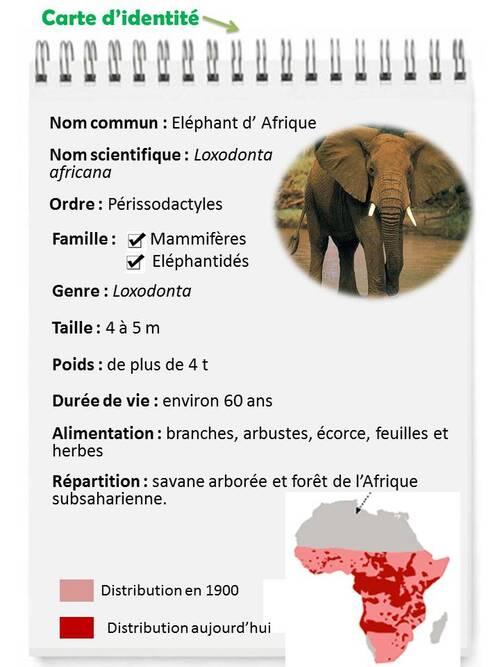 JUIN : L'éléphant