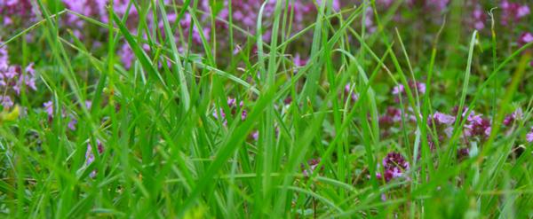 Tubes herbe,fleurs