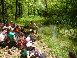 A la découverte des amphibiens. cycle 2