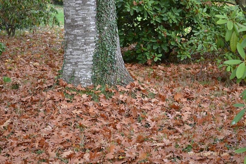 L'automne et ses citations