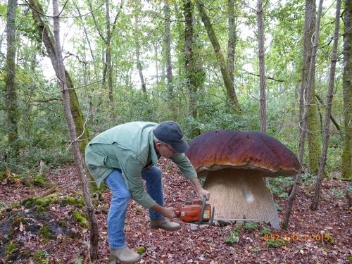 Allons aux champignons.