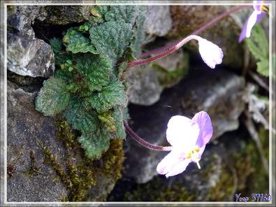 Pour Micromick : une fleur au 1200 mm (Clear Image avec 600mm x 2) et au 600 mm. Enregistrer les images pour voir les Exif (mais le Clear Image ne parait pas, dommage !)