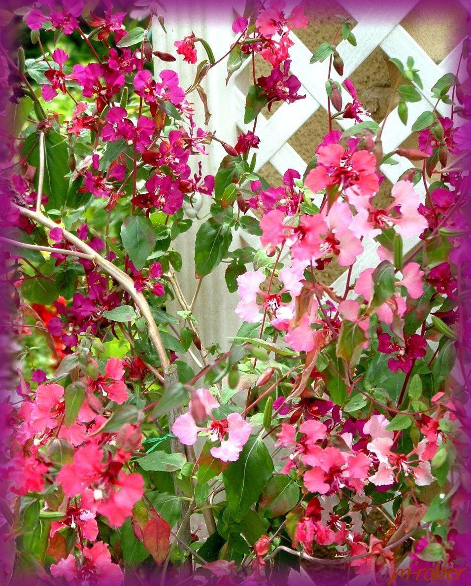 Mon univers de jardin en ce début d'été