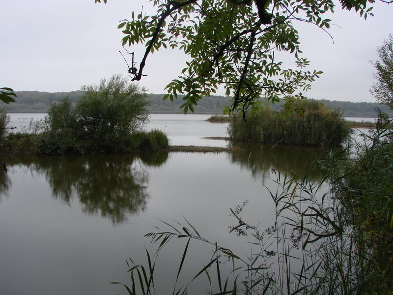 Lac de Virelles (3)
