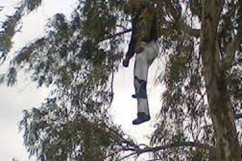 العثور على مراهق معلّق في شجرة بسيدي عبد العزيز بجيجل