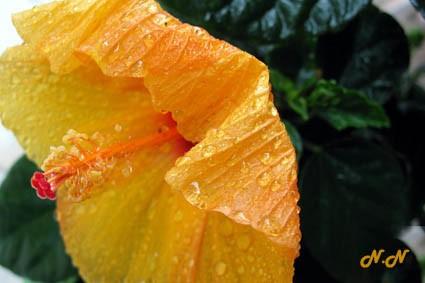 blog-4161fleurs-pluie-2.jpg