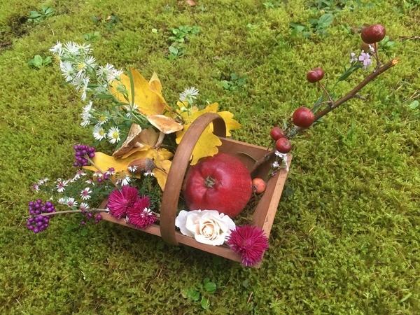Concours pour les Journées des Plantes d'automne de Chantilly : les premières participations...