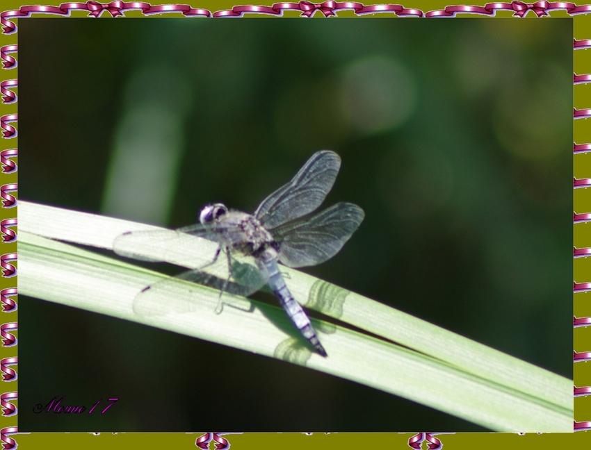 Miss Blue et quelques photos d'insectes et de fleurs