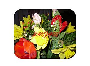 bonjour tulipe