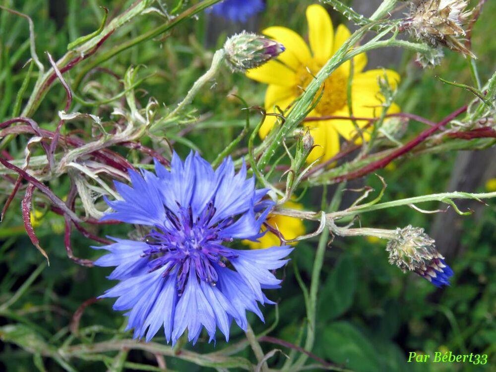 de jolies fleurs d'été
