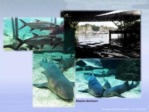 L'aquarium de Guadeloupe au Gosier
