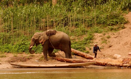 LAOS Eléphants