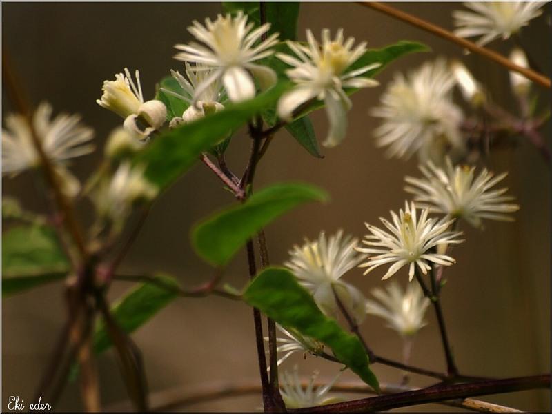 ronde de fleurs