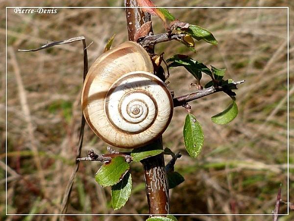 Escargot12B