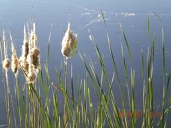Balade voiliers lac et fleurs vidéos