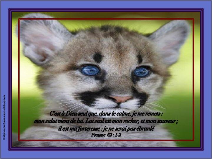 Lui seul est mon rocher, et mon sauveur - Psaumes 62 : 1-2