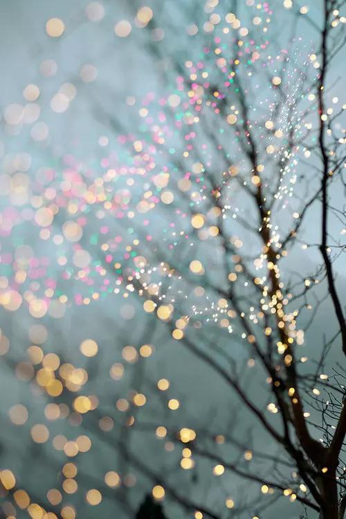 Image de light, tree, and winter