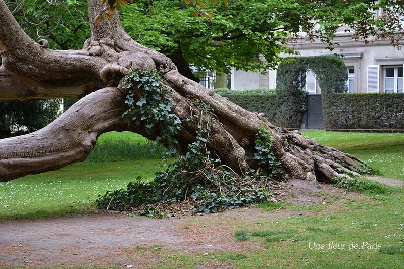 Jardin du luxembourg campagne d cennale d 39 abattage et de for Arbres jardin du luxembourg