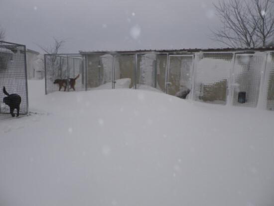Nos chiens dans la neige......