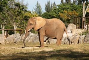 zoo 2615