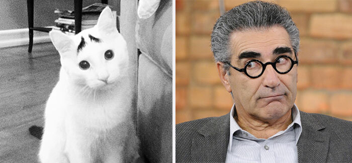 cat-looks-like-other-thing-lookalikes-celebrities-35__700