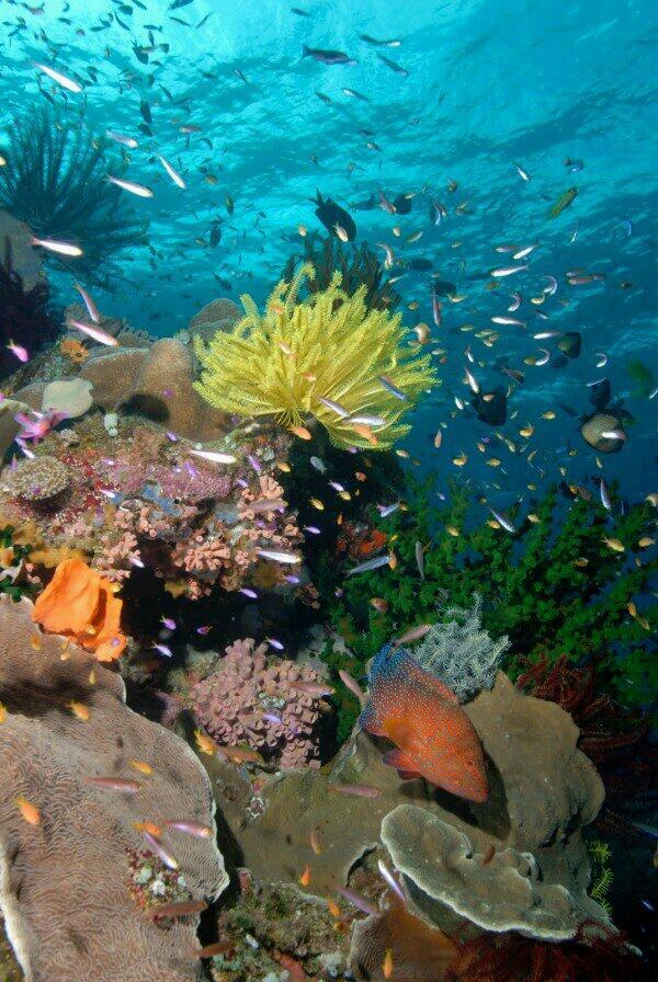 La reproduction des coraux