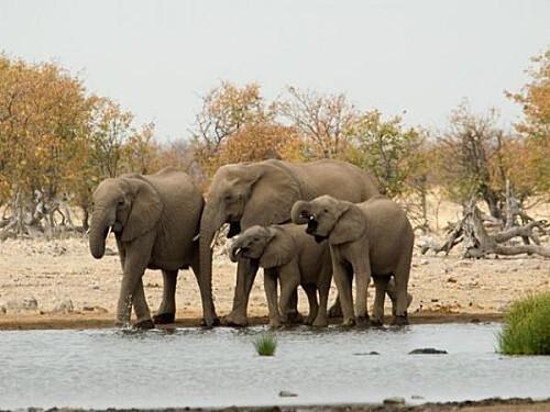 safarivingtsix-thumb-940x705-1719-600x450