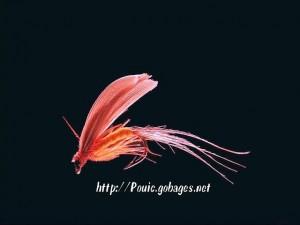 Mouche pour la pêche, plumes de coq