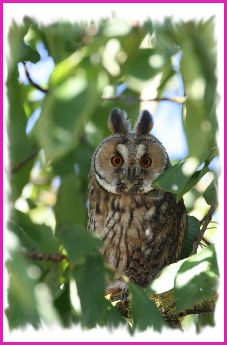 Ornithologie .....