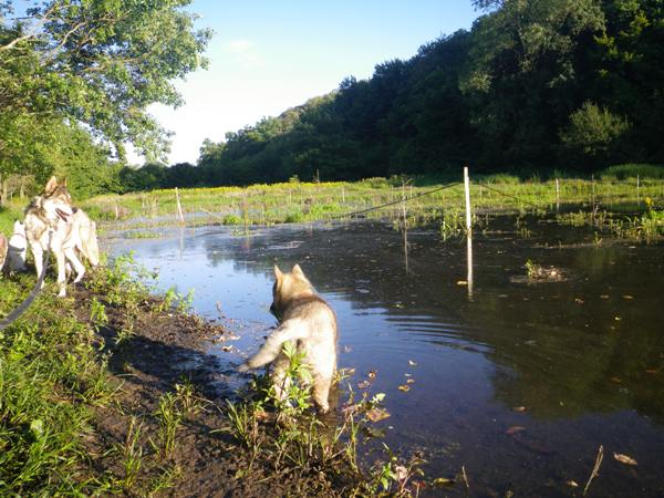 8 semaines: Ballade au lac