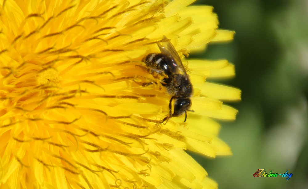 les insectes travaillent!!!!