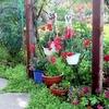 jardin-fleuri-265739.jpg