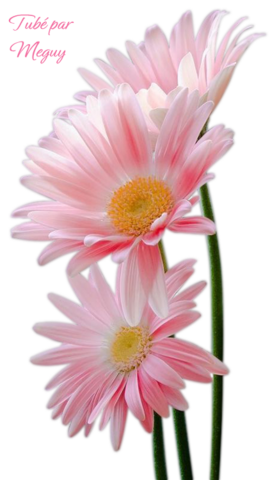 Fleurs page 1