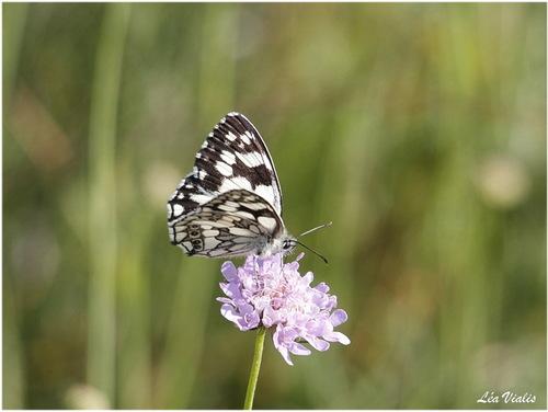 Découvrir les papillons